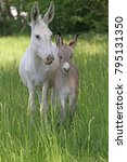 Small photo of donkey foal with mother