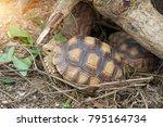 african spurred tortoise at... | Shutterstock . vector #795164734