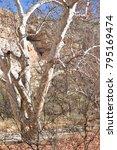 camp verde  arizona.  u.s.a. ... | Shutterstock . vector #795169474