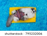 cat rest in the pool on the air ... | Shutterstock . vector #795232006