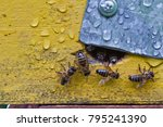 from beehive entrance bees... | Shutterstock . vector #795241390