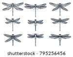 Stock vector set of hand drawn stylized dragonflies outline isolated on white background suitable for coloring 795256456