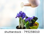 gardening tools and flowers on... | Shutterstock . vector #795258010