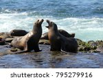 wild seals on la jolla cove in... | Shutterstock . vector #795279916