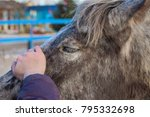 Small photo of Care about horses, kind pony, grey whith spots friend, animal caress, head and nose, pretty eye