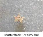 leaf on a winter street | Shutterstock . vector #795392500