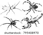 vector drawings sketches... | Shutterstock .eps vector #795408970