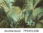 abstract tropical background... | Shutterstock . vector #795451108