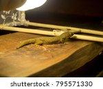 light lamp and house lizards   Shutterstock . vector #795571330