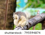 in selective focus a gray cute... | Shutterstock . vector #795594874
