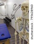 skeleton in medical studio.... | Shutterstock . vector #795628960