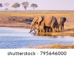 group of african elephants... | Shutterstock . vector #795646000