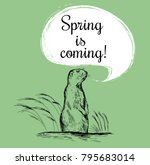 marmot sketch vector... | Shutterstock .eps vector #795683014