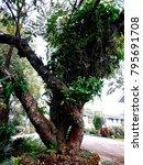 Small photo of Beauti ful tree
