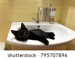 Stock photo big black cat with yellow eyes lies in white sink 795707896