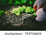 gardening  weeding weeds....   Shutterstock . vector #795718654