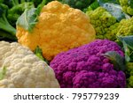 Colorful Cauliflowers On The...