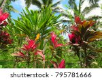 red and green tropical plants... | Shutterstock . vector #795781666