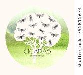 vector illustration. cicadas .... | Shutterstock .eps vector #795815674