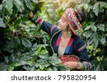 hill tribe coffee plantation... | Shutterstock . vector #795820954