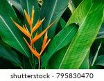 Exotic Flower On Dark Green...
