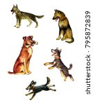Stock photo illustration by watercolor set of images of dogs of different breeds and different characters 795872839