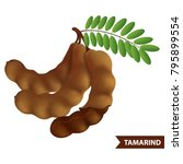 tamarind vector illustration   Shutterstock .eps vector #795899554