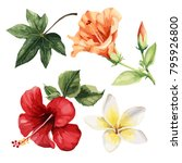 tropical flowers  watercolor.... | Shutterstock .eps vector #795926800