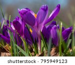 view of magic blooming spring... | Shutterstock . vector #795949123