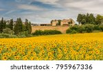 rural summer landscape with... | Shutterstock . vector #795967336