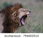 Lion Yawn In The Masai Mara...
