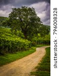 Small photo of The picturesque Alsace region of France with its famous vineyards on the slopes of the Vosges Mountains