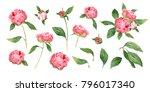 romantic watercolor peonies ... | Shutterstock . vector #796017340