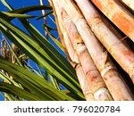 sugar cane field in brazil   Shutterstock . vector #796020784