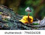 magic mushroom. small psilocybe ...   Shutterstock . vector #796026328