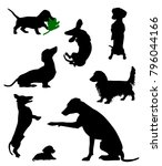silhouettes of dachshunds.... | Shutterstock .eps vector #796044166