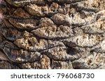 close up palm tree bark...   Shutterstock . vector #796068730
