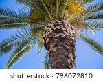 close up zoomed in palm tree...   Shutterstock . vector #796072810