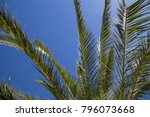 palm fronds against blue sky...   Shutterstock . vector #796073668