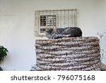 Grey Street Cat Sleeping On A...