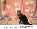 Tabby Cat Valentine's Day...