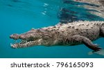 American Saltwater Crocodile in Queen