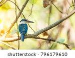 bird  collared kingfisher ... | Shutterstock . vector #796179610