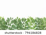 fresh moringa leaves   moringa... | Shutterstock . vector #796186828