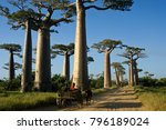 morondava  madagascar  april 13 ... | Shutterstock . vector #796189024