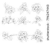 vector set of line drawing... | Shutterstock .eps vector #796247443