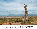 Dead Tree Against Blue Sky