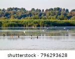 huge flock of great white...   Shutterstock . vector #796293628