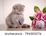 Stock photo cat a kitten is playing game with flowers scottish fold kitten wooden box with flowers bouquet 796303276