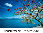 Small photo of A tree flowering tree at Kawakawa bay New Zealand